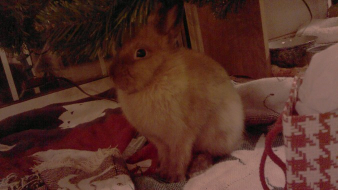Betsy Bun Bun in her natural habitat: beneath an artificial christmas tree that Andrea won't let her eat.
